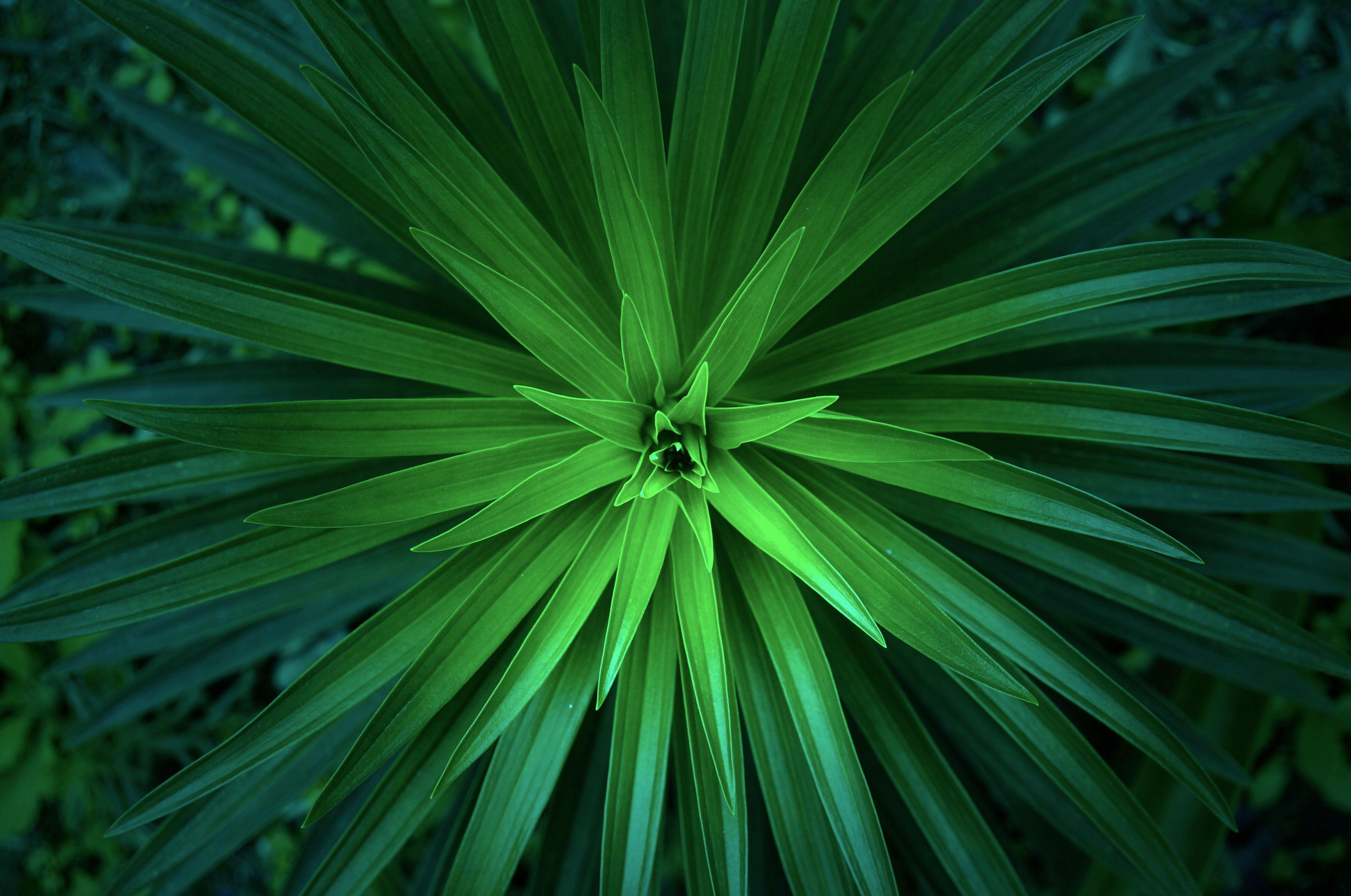 Aloe harmonie